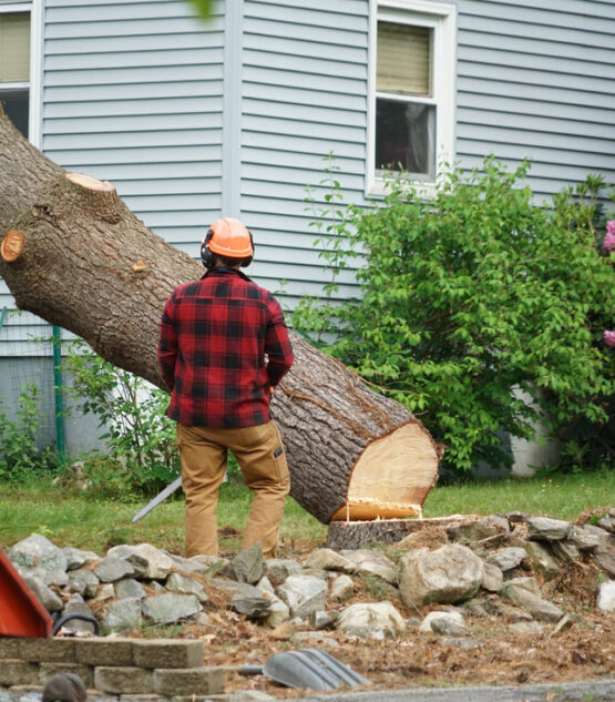 tree removal service franklin ma